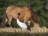 Crane with pony