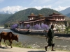 Punakha Dzong (2)